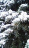 Snowy-Fichte Stockfotografie