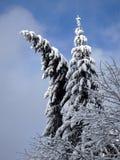 Snowy-Fichte Lizenzfreie Stockfotografie