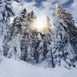 Snowy-Fichte im Gebirgswald Stockfotografie