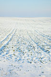 Snowy field Royalty Free Stock Images