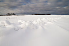 Snowy field. Stock Images