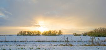 Snowy field along trees at sunrise Royalty Free Stock Photography