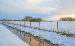 Snowy field along trees at sunrise Stock Photos