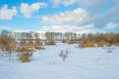 Snowy field along trees at sunrise Stock Image