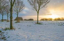 Snowy field along trees at sunrise Royalty Free Stock Image