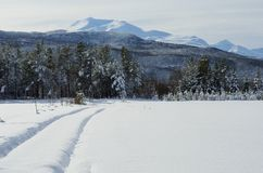 Snowy field and car tracks on forest road with sunshine and mountain backdrop Stock Photo