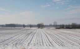 Snowy Field Stock Image