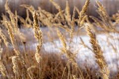 Snowy field and plants. Beautiful winter landscape Stock Image