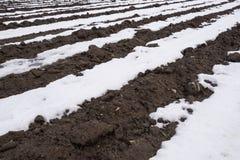 Snowy field, potato furrows. White snow and black soil. Stock Photos