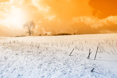 Snowy field at sunset Stock Photo