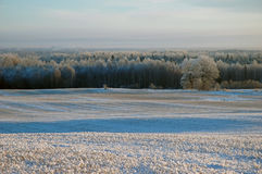 Snowy field on winter landscape Stock Images