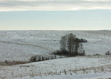 Snowy fields with hay bales Stock Images