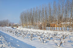 Snowy fields at sunny day. Piedmont, Italy. Stock Photography