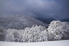 Snowy fields, trees , winter in the Vosges, France. Stock Photo