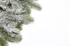 Snowy fir branch Stock Photos