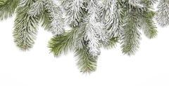 Snowy fir branch Royalty Free Stock Image
