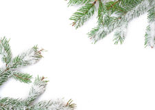 Snowy fir branches. Christmas frame and place for text.  stock photography