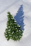Snowy fir tree casting shadow Royalty Free Stock Photos