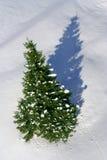 Snowy fir tree casting shadow Royalty Free Stock Photos