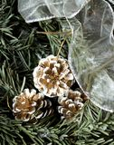 Snowy fir tree with fir-cone and decoration white stripe. Stock Photo