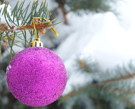 Snowy fir tree and decoration. Pink shiny ornament on natural trees under snow,Photography Royalty Free Stock Photos