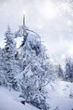 Snowy fir tree Stock Photos