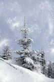 Snowy fir tree Royalty Free Stock Photography