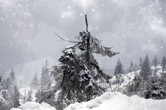 Snowy fir tree Stock Photo