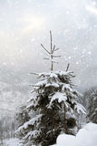 Snowy fir tree Stock Photography