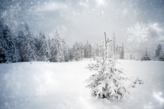 Snowy fir tree Stock Image