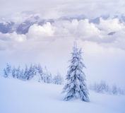 Snowy fir tree Royalty Free Stock Photo