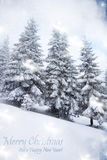 Snowy fir trees Royalty Free Stock Photo