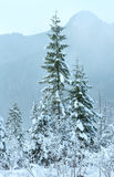 Snowy fir trees. Stock Photo