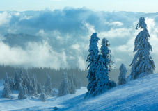 Snowy fir trees on morning winter mountain slope. Stock Photography