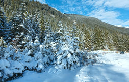 Snowy fir trees. Stock Photography
