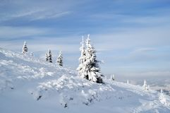 Snowy fir trees on the slope Royalty Free Stock Photos