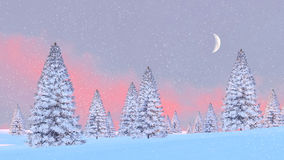 Snowy fir trees at snowfall sunrise Royalty Free Stock Photo