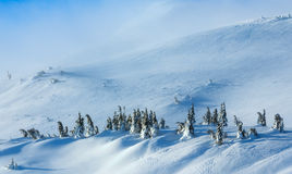 Snowy fir trees on winter hill. Stock Image