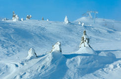 Snowy fir trees on winter hill. Royalty Free Stock Images