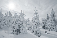 Snowy Firs with Christmas Objects Royalty Free Stock Photography