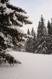 Snowy firs Royalty Free Stock Photos
