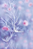 Snowy fluff art photo. Art photo. tender weightless white fluff on a thin stem, in the background blurry image of red poppies flowers. . Soft focus blur Royalty Free Stock Images