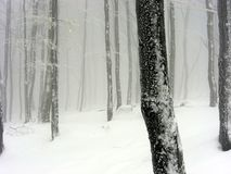 Snowy foggy landscape. Snowy foggy forest in Hungary at Winter Stock Images