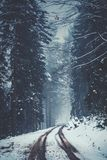 Snowy and Foggy Street in a winter forest royalty free stock photos
