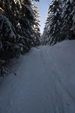 Snowy foot-path in forest Stock Photos
