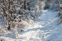 Snowy foot path in a wintry forest Stock Images