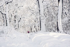 Snowy footpath in beautiful winter forest Stock Images