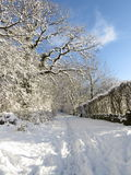 Snowy footpath on bright winter day. Footsteps and dog paw prints lead into the distance along a snowy path that is lined with snow covered hedges and trees royalty free stock image