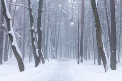 Snowy footpath in city park on misty winter day. Park alley covered with snow royalty free stock photography
