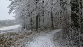 Snowy Footpath / Farm Road leading into a Forest with ice and snow covered trees royalty free stock images